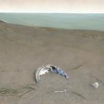 Abalone Shell – Derek Bond