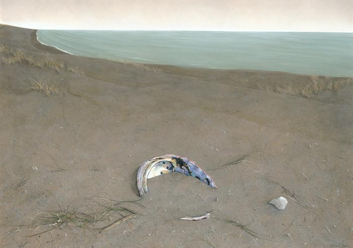 Abalone Shell by Derek Bond, Limited Edition print from original egg tempera painting by Derek Bond.