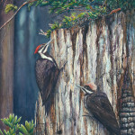 Linda Parkinson, Pileated Woodpeckers, Limited Edition print from original watercolor.
